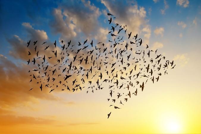 cloud migration birds